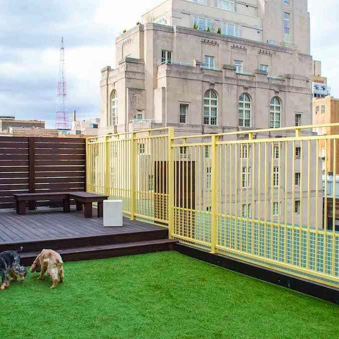 versailles-rooftop-dog-park.03+copy